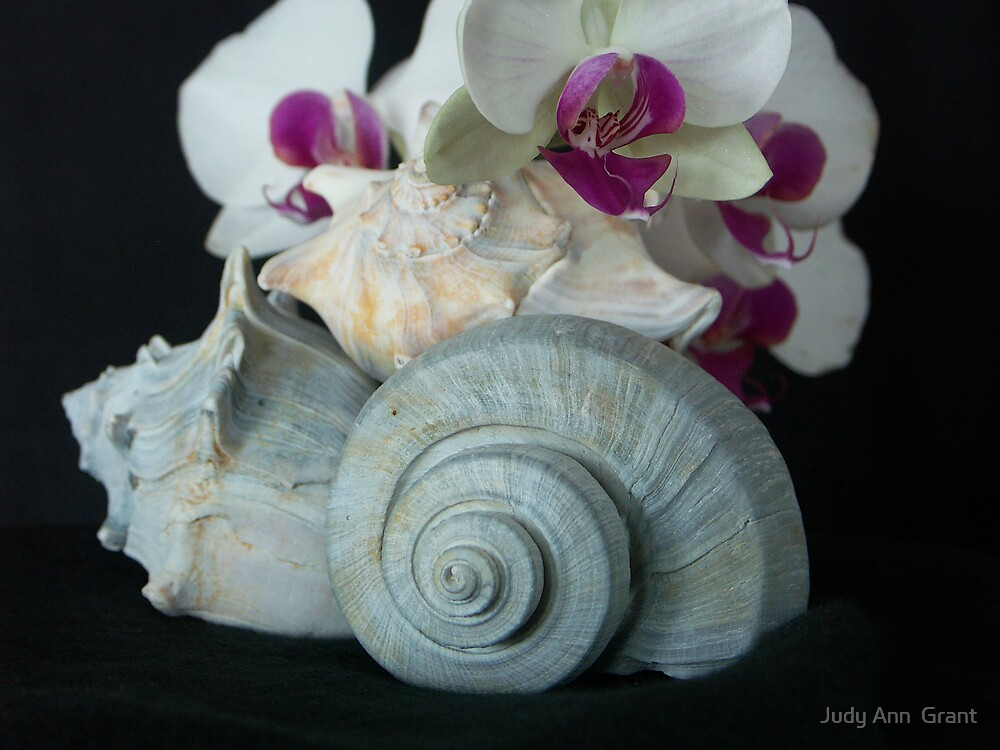 Orchids & Seashells  by Judy Grant