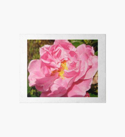 Governor General's rose 10 Art Board
