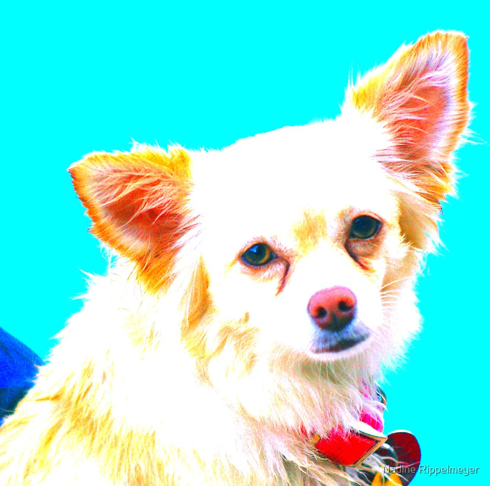 Chihuahua Pop Art by Nadine Rippelmeyer
