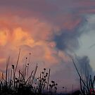 Sunset  by Mazy
