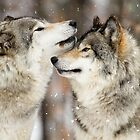 Winter Wolves by Heather King