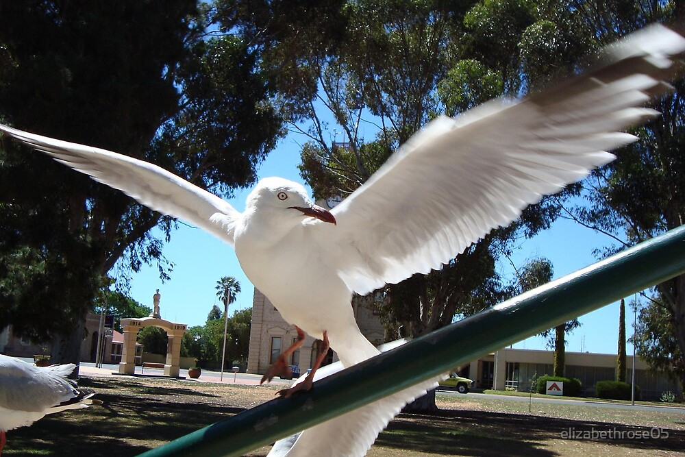 Seagull Landing by elizabethrose05