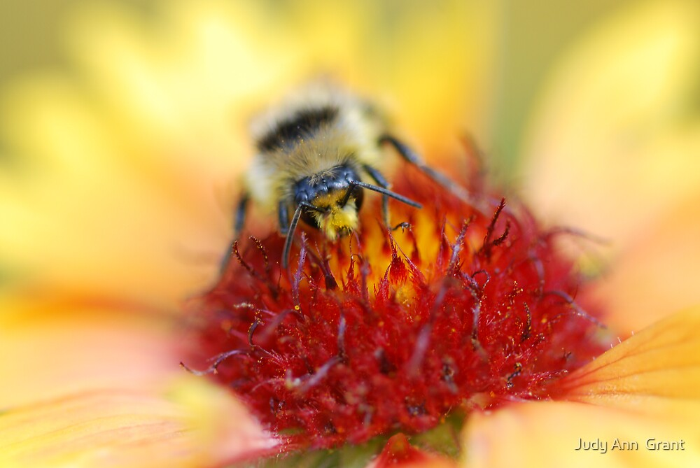 Busy bee  by Judy Ann  Grant
