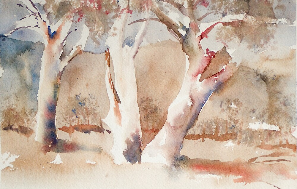 Gum trees by Andy Sussman