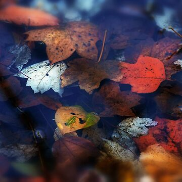 Autumn leaves in the water by Masha-Gr