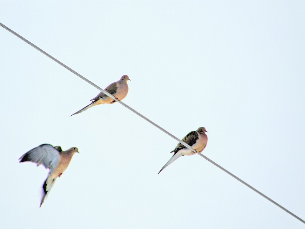 Birds On A Wire by marchello