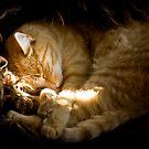 Power nap by Kurt  Tutschek