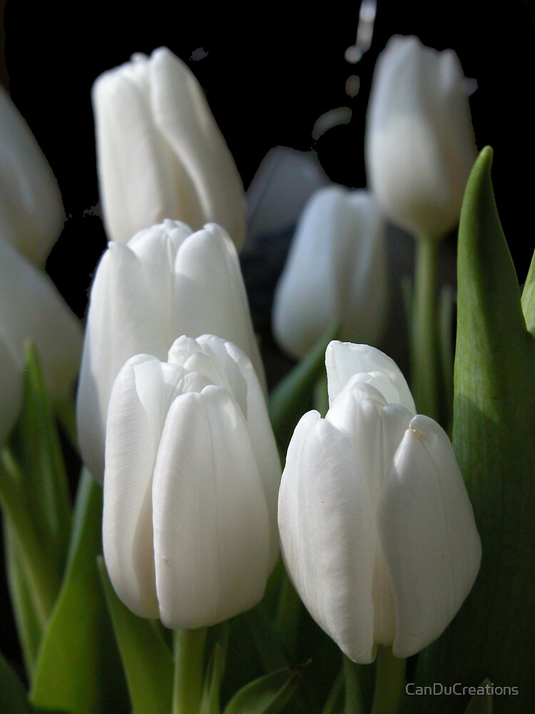 Moonlit tulips by CanDuCreations