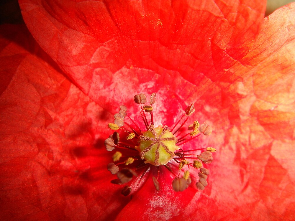 red red by Gipi Gopinath