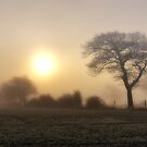 Fog by Chris Charlesworth