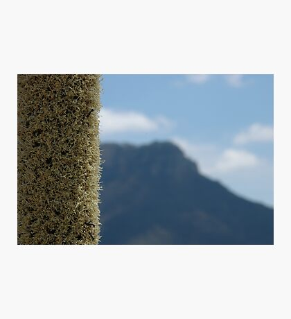 Xanthorrhoea with mountain Photographic Print