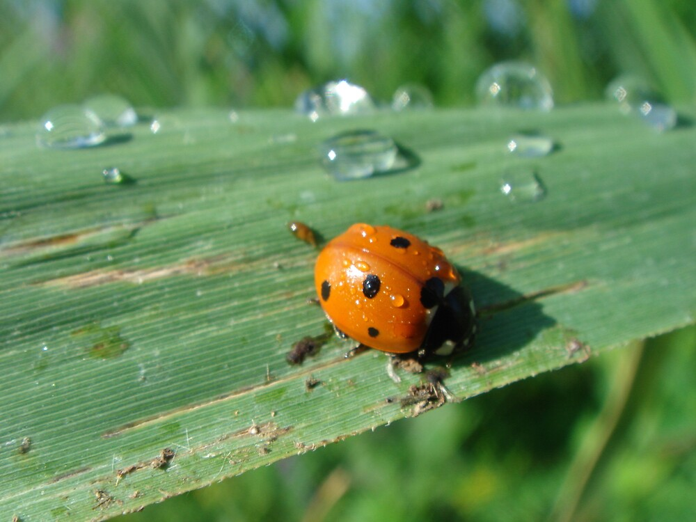 ladybird by Gipi Gopinath