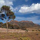 Wilpena Pound. South Australia. by johnrf