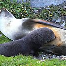 Antarctic Fur Seal Mother & Pup by Carole-Anne
