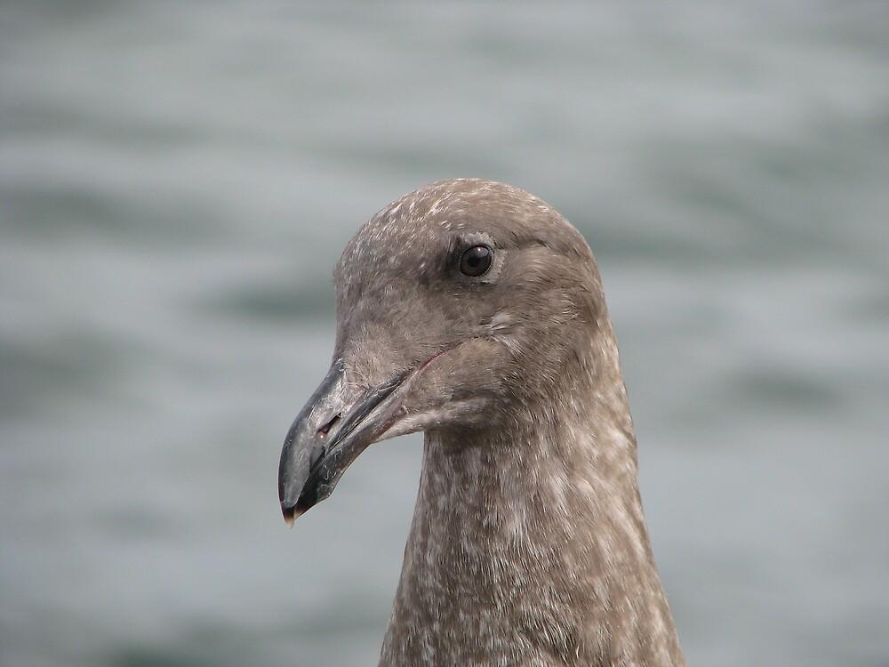 The Gull by Robert Jenner