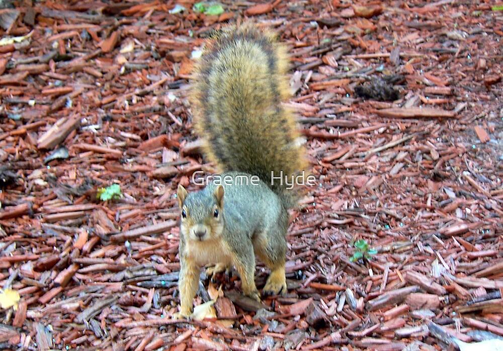 Cheyenne Squirrel by Graeme  Hyde