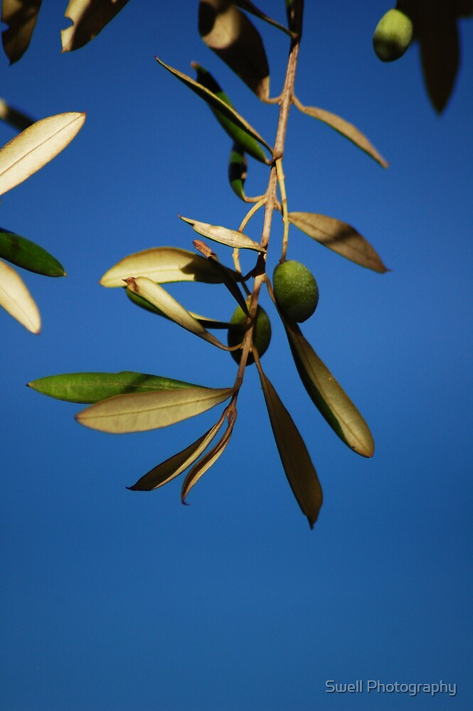 Olives in the Sun by Swell Photography