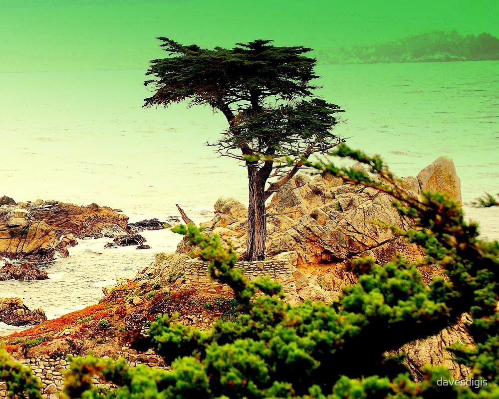 CARMEL CALIFORNIAS ....LONE CYPRESS TREE by davesdigis