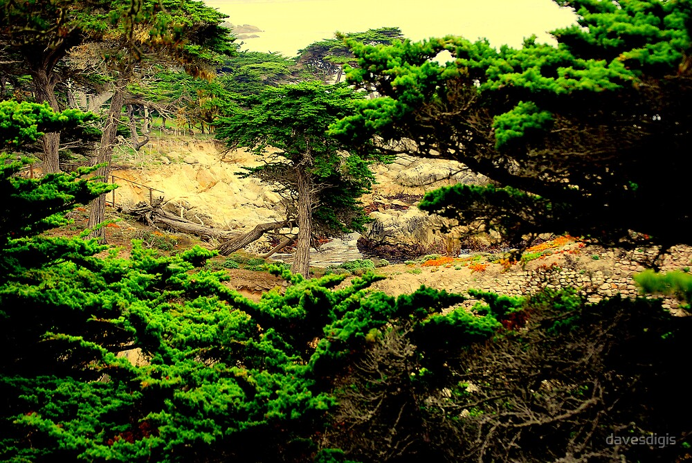 Carmel California's Coastal Cypress Groves by davesdigis