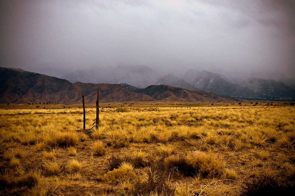 Winter in the desert by Estevan Montoya