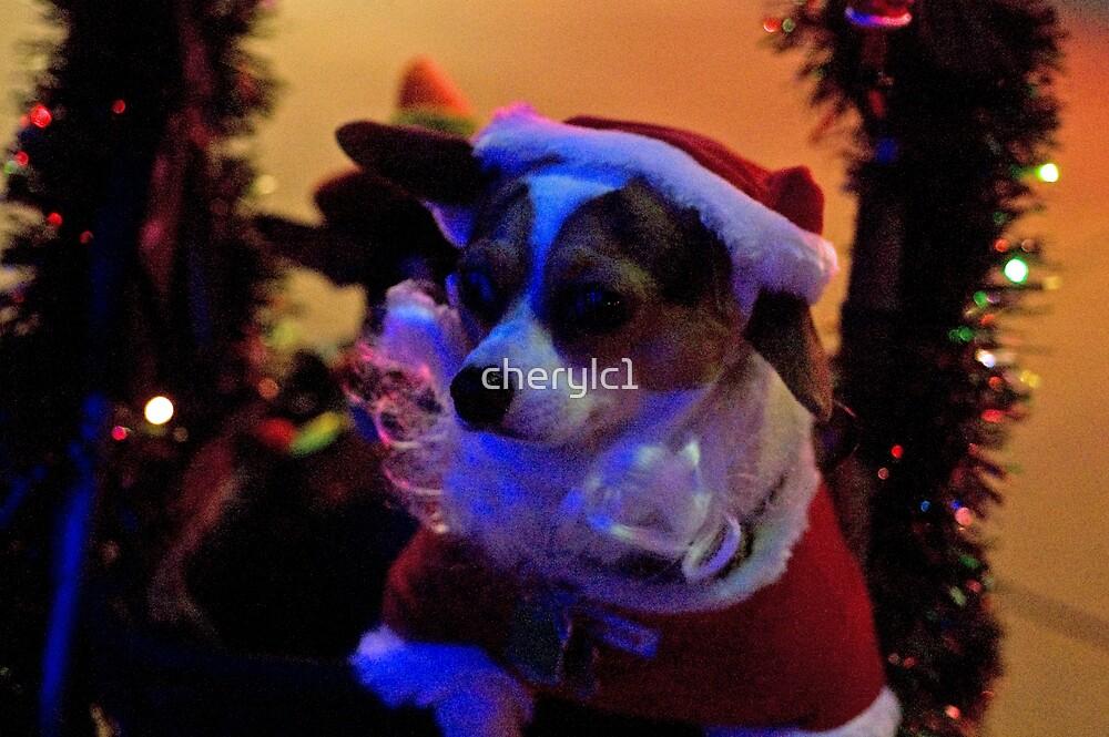Santa Dog by cherylc1