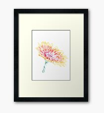 Blooming Daisy Abstract Framed Print