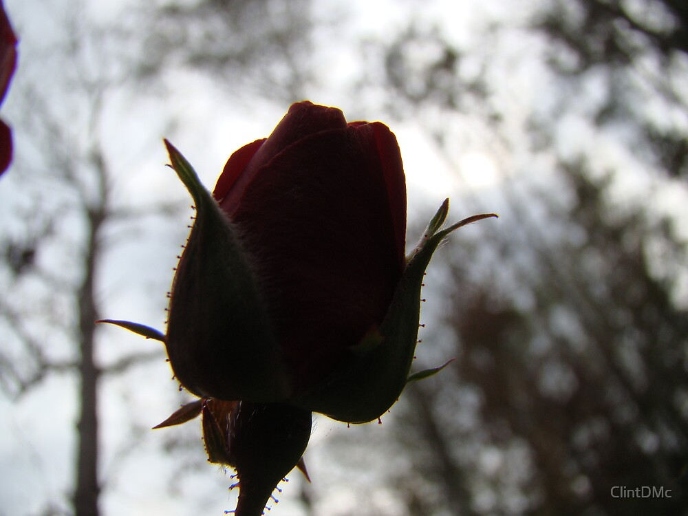 A Rose by any other name is still in the dark. by ClintDMc