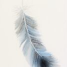 Grey blue feather in watercolour by LisaLeQuelenec