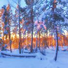 Winter morning by Veikko  Suikkanen