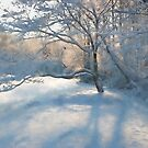 Dogwood in the Snow by Eileen McVey