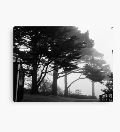 Trees In A Veil Canvas Print