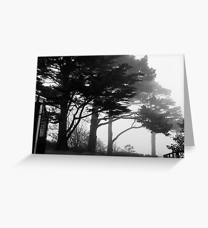 Trees In A Veil Greeting Card