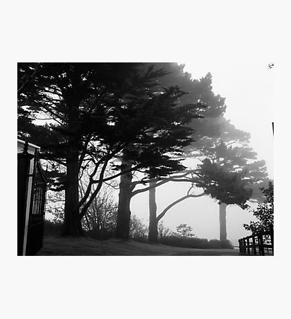 Trees In A Veil Photographic Print