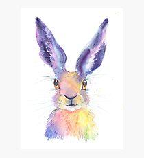 Rainbow Hare Photographic Print