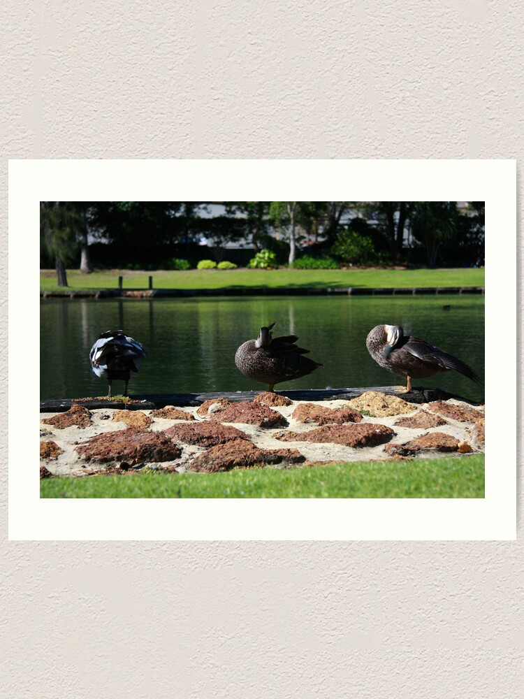 Alternate view of Ducks standing in a line Art Print