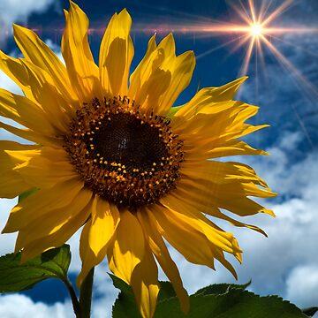 Sunflower Brilliance II by alabca