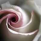 Swirl by Amanda White