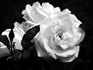 Black and white rose trio by Beth Brightman