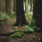 { fern gully } by Lucia Fischer