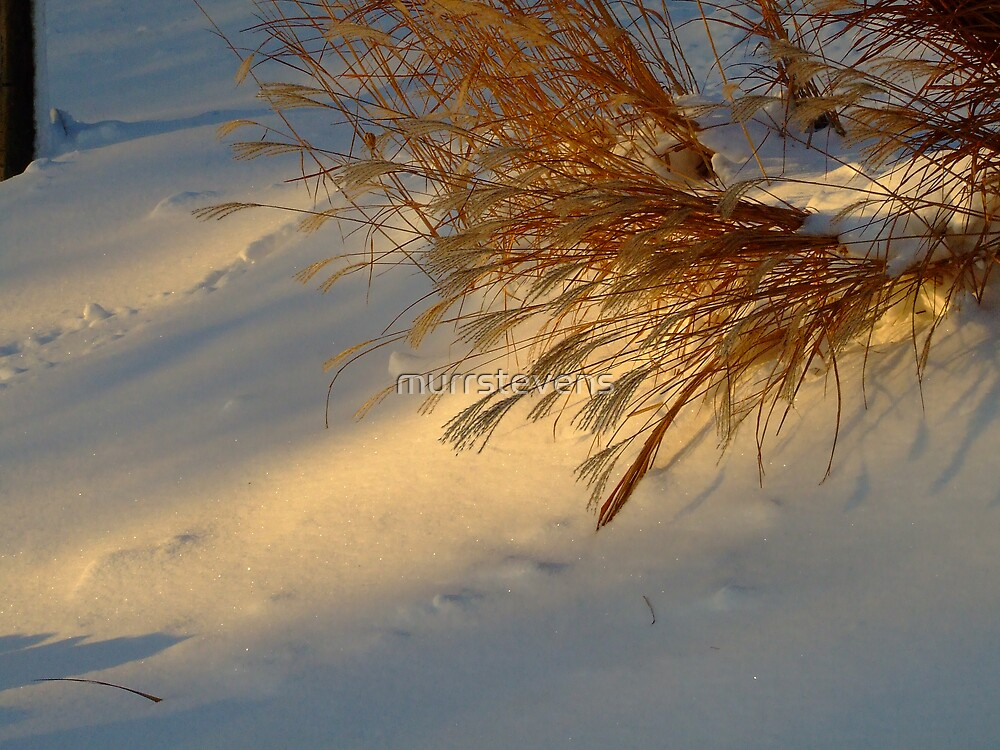 Cold Snow Warm Grass by murrstevens