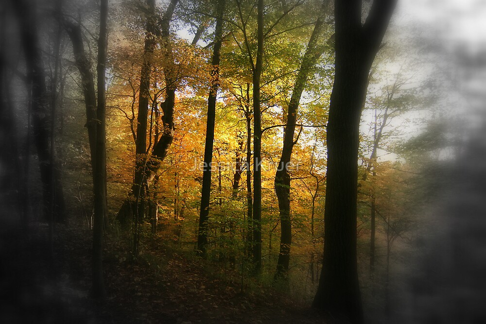 Light in the Trees by Jessica Kruer