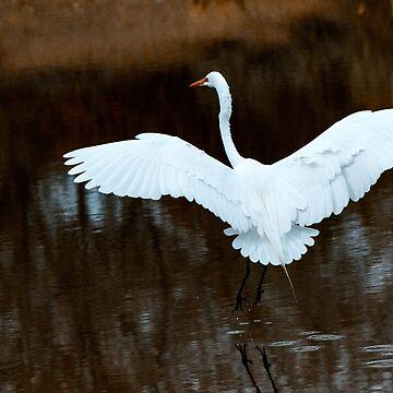 Egret Landing by gemlenz