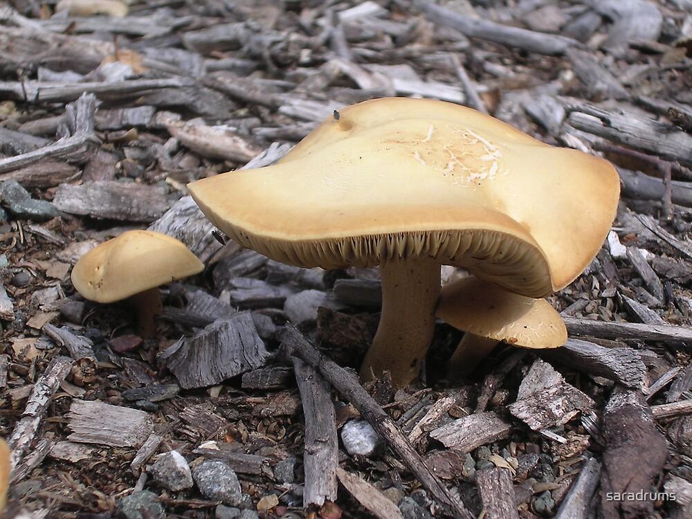 Mushroom family by saradrums
