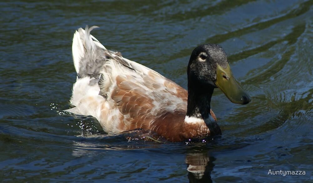 Wood Duck by Auntymazza
