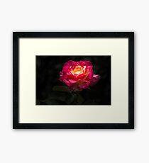 A Rose for Love Framed Print