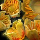 Flowers of the Tulip Tree  (Liriodendron) by Bev Pascoe