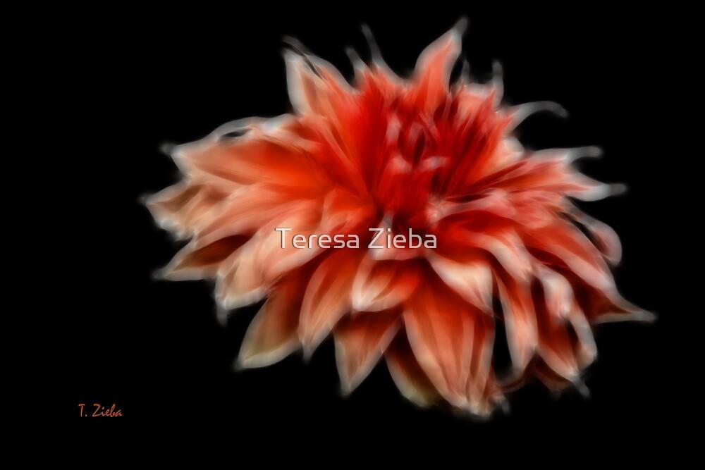 Orange Dahlia by Teresa Zieba