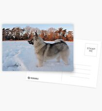 Saga, Snow & Sunlight Postcards
