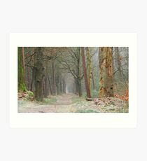 Back to the December forest Art Print