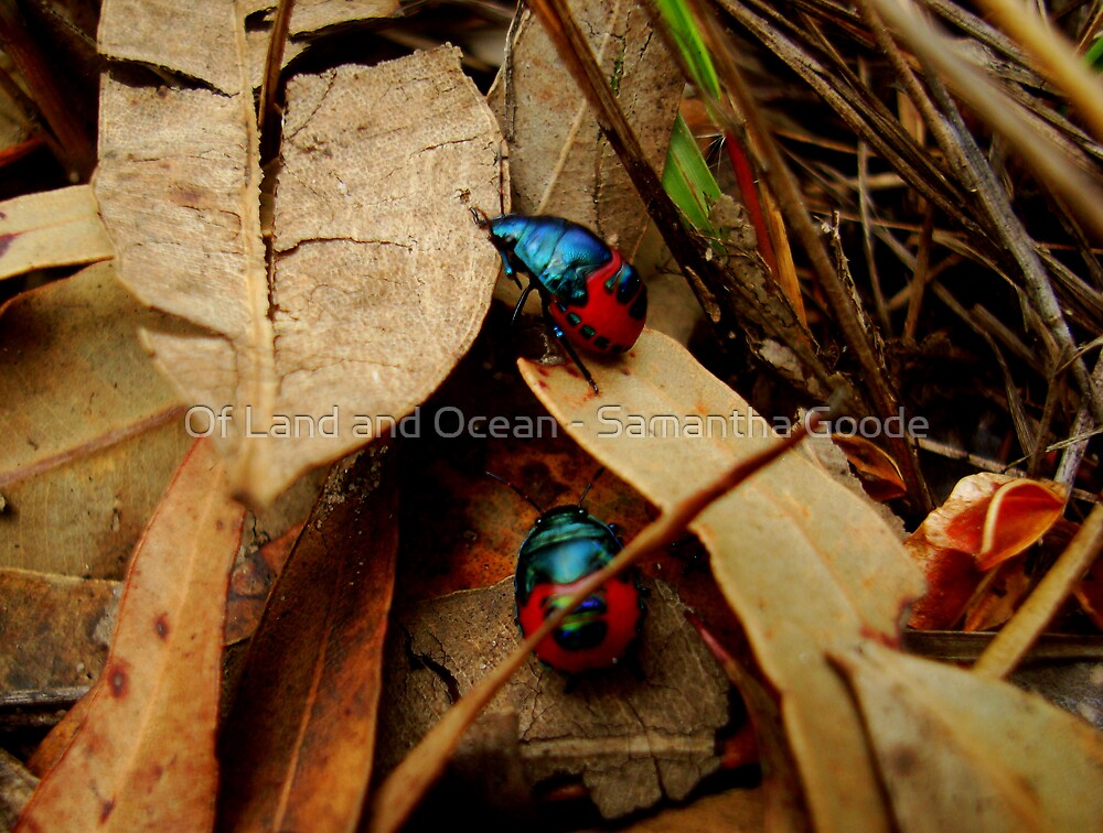Jewelled Beetles -Taking a walk on the wild side  by Of Land & Ocean - Samantha Goode